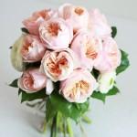 head_庭園玫瑰